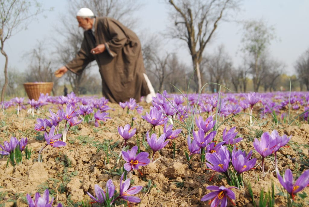 30 interesting facts about saffron